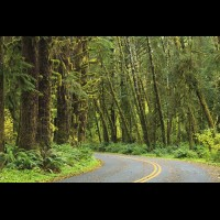 Country road, Washington, USA :: RDShohrainforestwa60193jpg